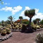plantas-endemicas-canarias